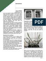 Graft of Seedlings on Selenicereus Wick_graft