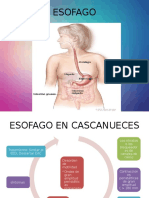 ESOFAGO Patoligias 2