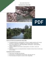 Ecosistemul râului Bîc