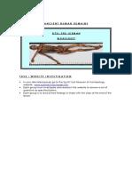 iceman-worksheet.pdf