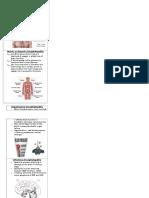 encephalopathy brochure