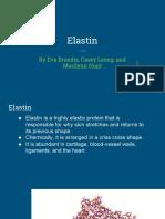 dna to protein- elastin