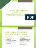 Enterococcus  Fecalis