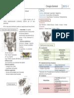 6 - Hernias.pdf