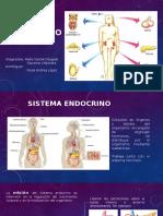 Sistema Endrocrino Presentación
