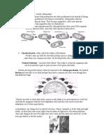 biology study guide-evol-immunity
