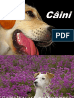 Câini Cos 6.4.pps