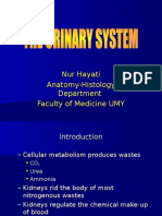 The Urinary System_ku.03