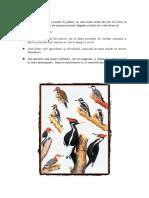 ciocanitoare.docx