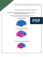 fundamentos-neurologicos