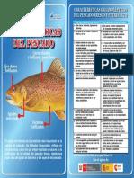 2a-Cartilla CaracteristicasdelPescado-a-emb.pdf