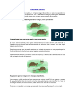 Cómo Criar Tortugas