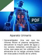 Aparato urinario.pptx