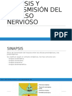 Sinapsis y Transmisión Del Impulso Nervioso