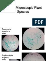 Creepy Microscopic Plant Species