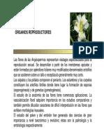 5 Organos ReproductOres  botánica morfológica - FAUBA