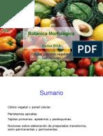 Celulas y Tejidos D Medan botánica morfológica - FAUBA