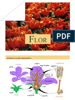 Flor -Botánica morfológica - FAUBA