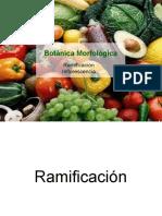 Ramificacion e Inflorescencia-parte 1 Botánica morfológica - FAUBA