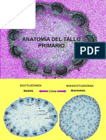 Raiz Tallo y Hoja Teorica Botánica morfológica - FAUBA