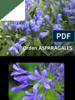 TP5 - Asparagales Botánica sistemática- FAUBA