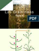 TP4 - Gramíneas II Botánica sistemática- FAUBA