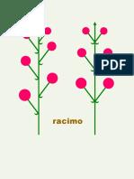 Ramificacion e Inflorescencia-parte 2 Botánica morfológica - FAUBA