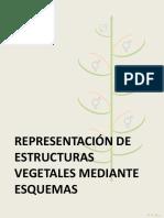 TP2 - Esquemas teóricos Botánica sistemática- FAUBA