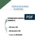 Extracción Filamentosos-1.pdf