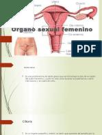 Organo Femenino