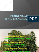 Pengenalan Jenis Mangrove.pptx