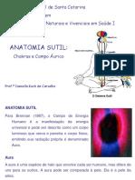 Aula Anatomia Sutil