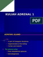 ADRENAL 1