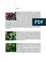 The Different Types of Begonias