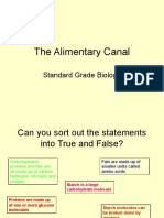 Alimentary Canal 3rd Year