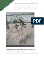 Planta 31 10