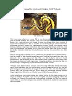 Bahaya Ular Laut Kuning