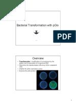 Bactl Trans PGlo