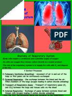 Respiratory System - Lab