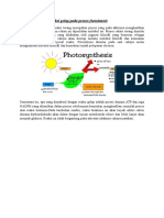 Reaksi Terang Dan Reaksi Gelap Pada Proses Fotosintesis