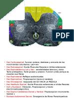 Neuroanatomía práctica