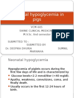 Neonatal Hypoglycemia in Pigs