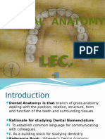 Dental Anatomy Lec.1