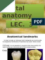 Dental Anatomy Lec.3