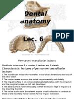 Dental Anatomy lec.6