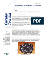 ct-8-producao-de-mudas-de-dendezeiro-no-am.pdf