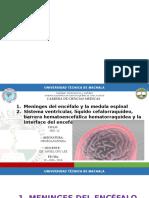7. Tronco Encefálico Microscopia