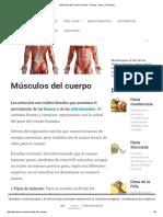 Músculos Del Cuerpo Humano - Grupos, Tipos y Funciones
