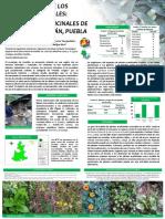 Cartel Plantas Medicinales 2014