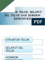 HORMON.pptx